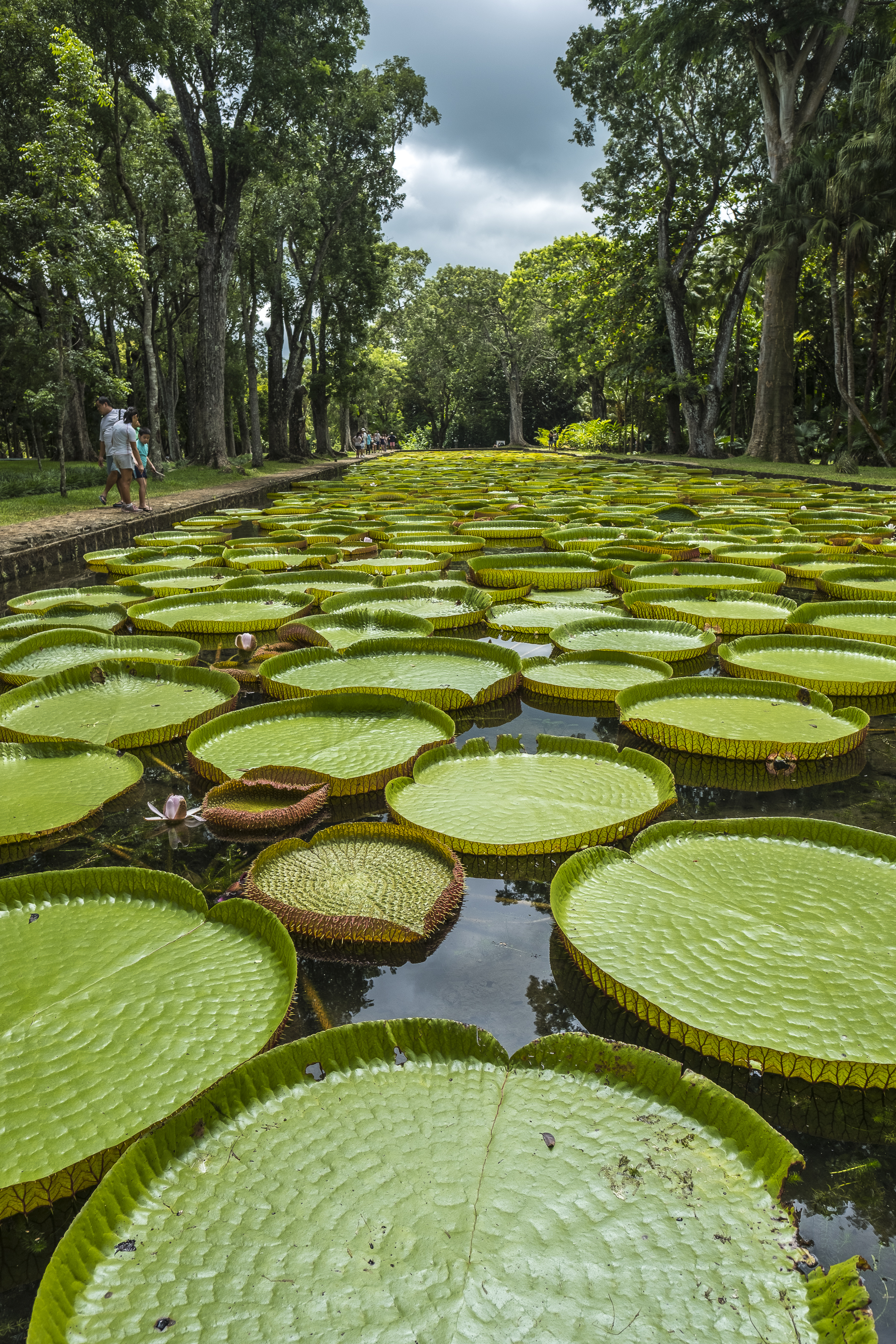 isla-mauricio-jardin-botanico-pamplemousses
